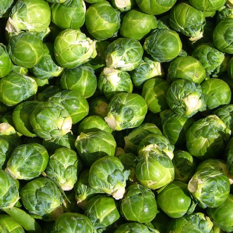 Common name: Brussels sprout