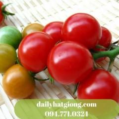 dailyhatgiong.com094.771.0324 (1)