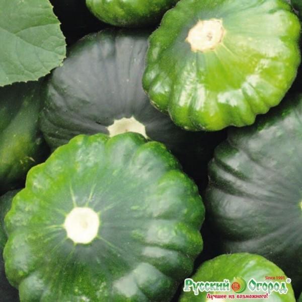 Bao bì hạt giống bí đĩa bay xanh F1