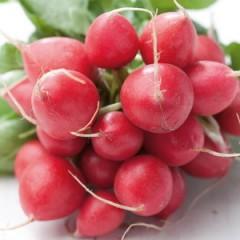 Hạt giống Củ cải đỏ Mini (cho nhà vườn)