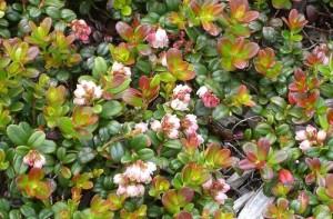 Hoa có màu hồng nhạt