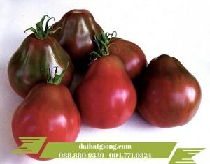 cây cà chua đen có hình dáng như những trái mận